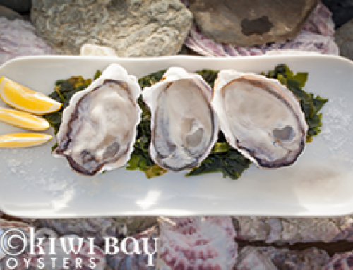 Okiwi Bay Oysters