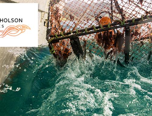 Port Nicholson Fisheries LP