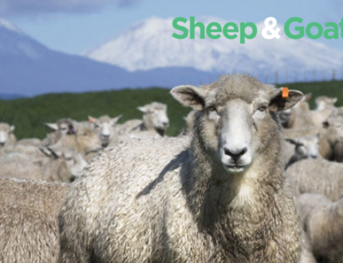 Sheep and Goat Dairy Project Regional Workshops