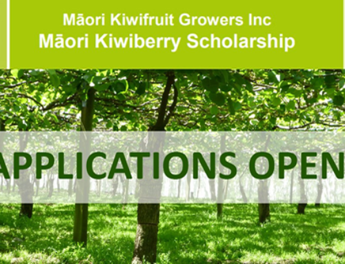 Māori Kiwiberry Scholarships